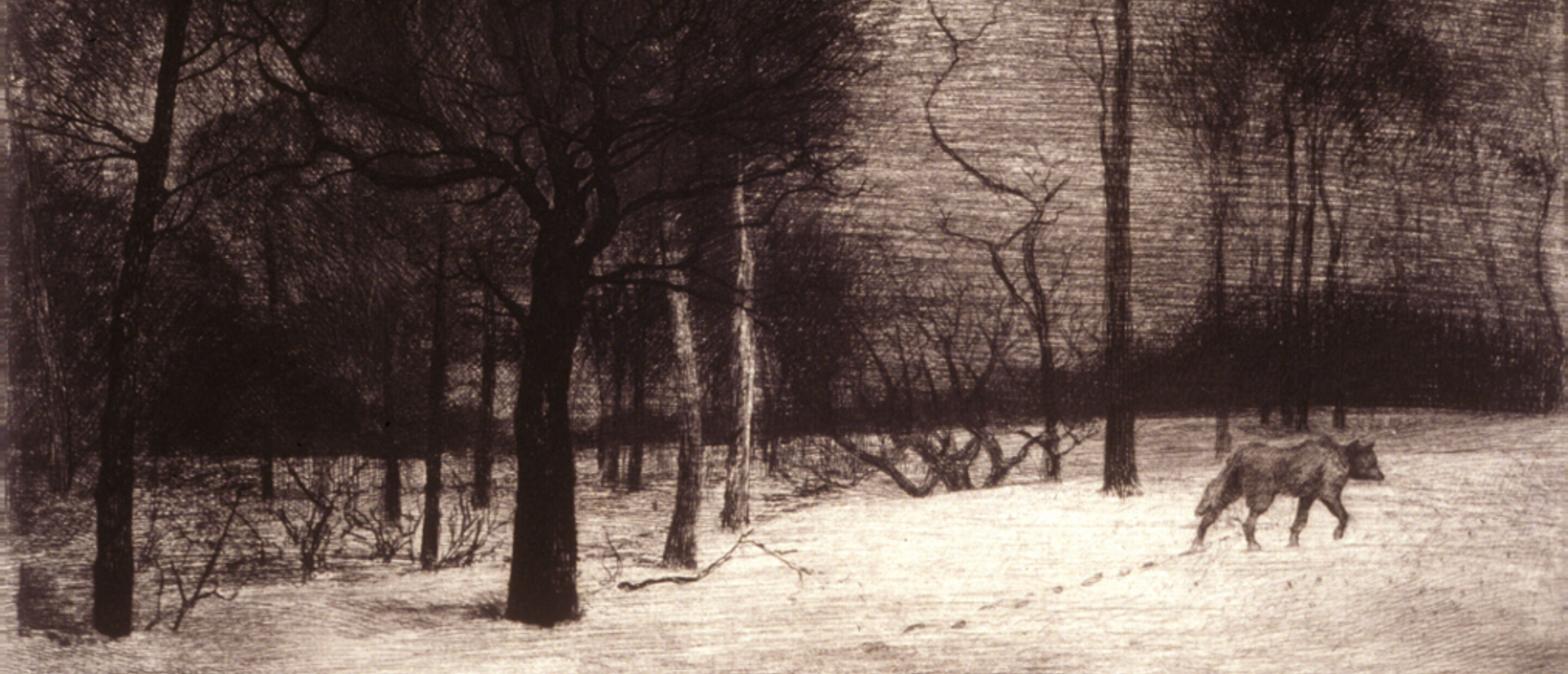 Landscape with trees and wolf walking making footprints in the snow