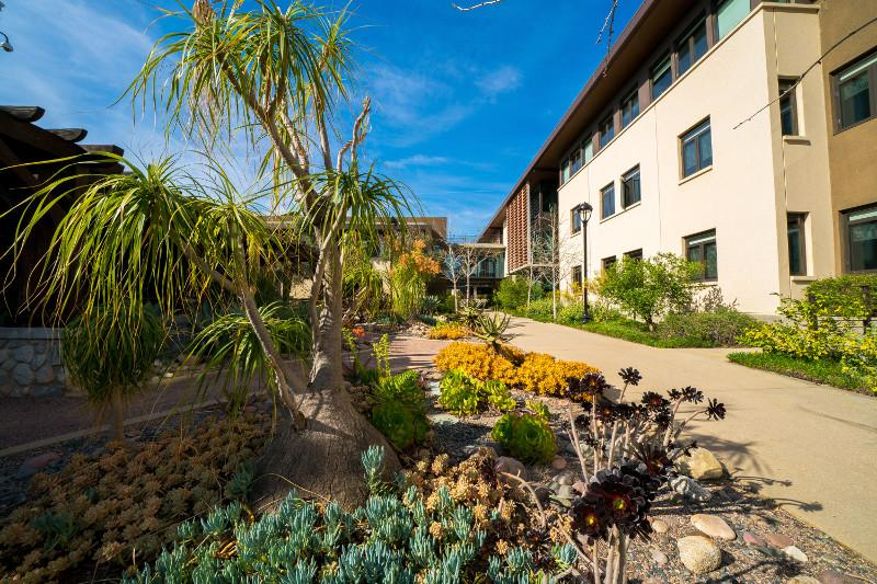 Drought tolerant landscaping at Sontag Hall