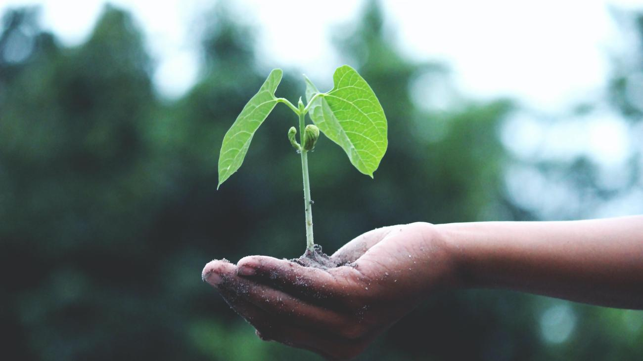 Hand holding a plant seedling
